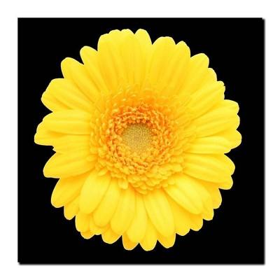 'Yellow Gerber Daisy' Ready to Hang Canvas Wall Art