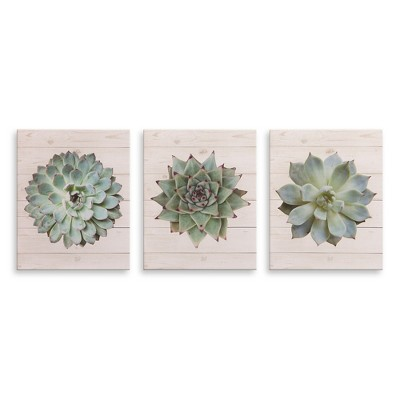 8 x10  3pc Succulents on Wood Canvas Art Green - Patton Wall Decor