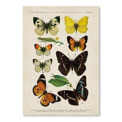 Americanflat Butterfly Specimen Diagram by Samantha Ranlet Poster