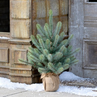 Park Hill Collection Burlap Wrapped Blue Spruce Seedling with LED Batt. Lights Sm