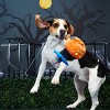 BARK Hide & Go Eeek! Cat Pumpkin Dog Toy - image 4 of 4