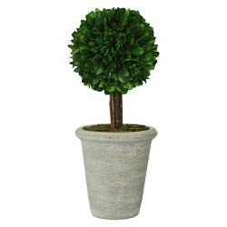 Preserved Boxwood Topiary - Medium - Smith & Hawken™