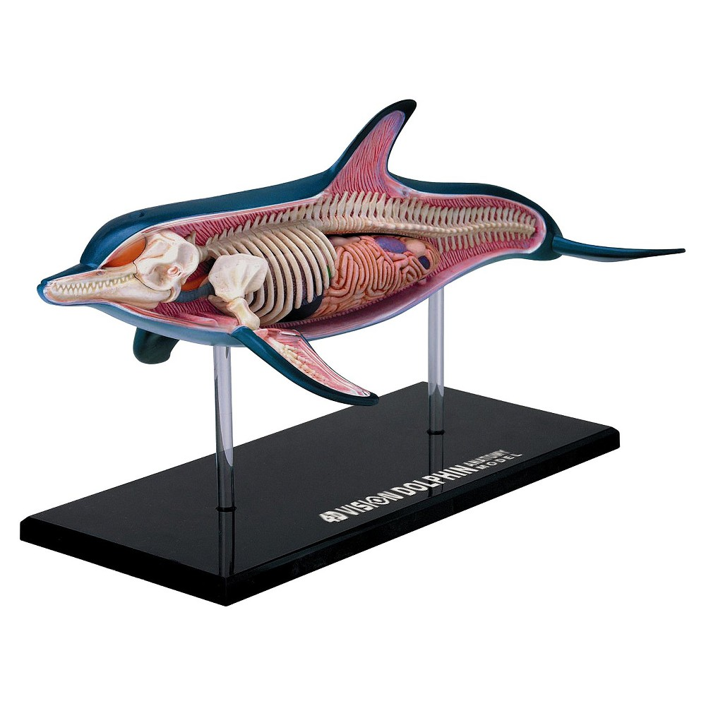 4D Master 4D-Vision Dolphin Anatomy Model 18pc