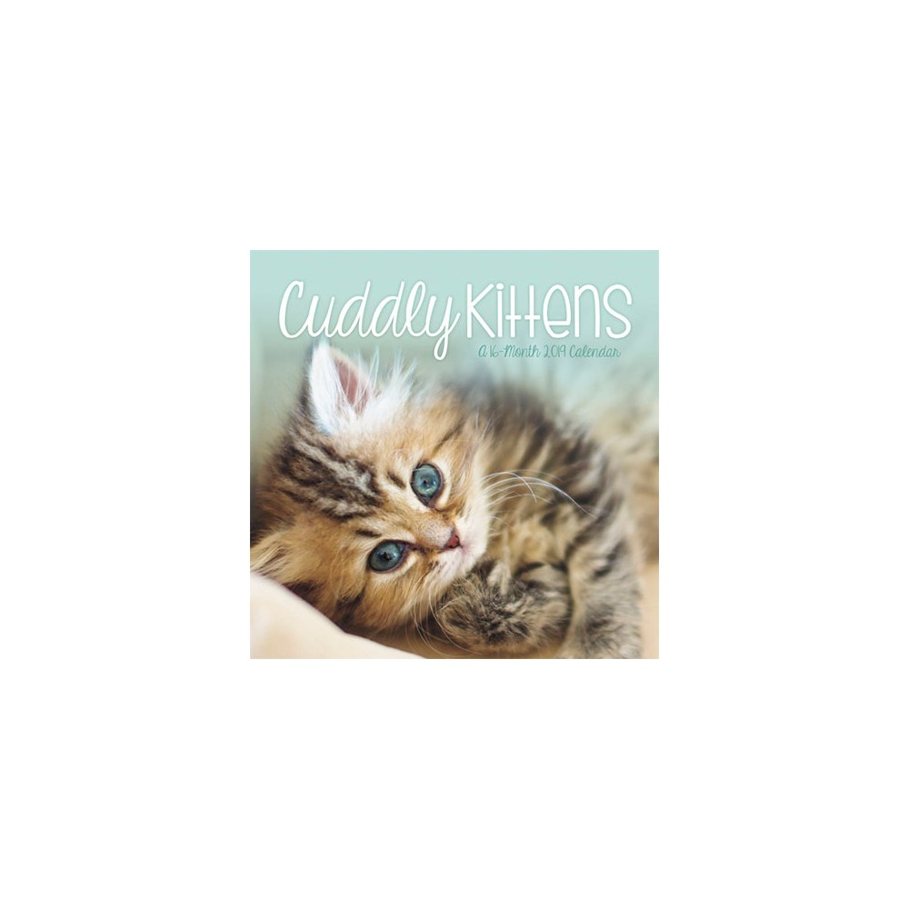2019 Wall Calendar Kittens - Trends International, Multi-Colored