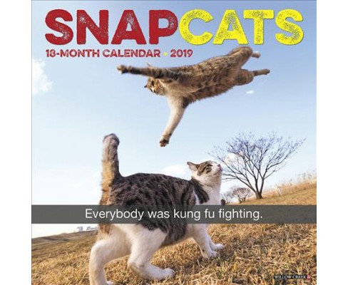 Snapcats 2019 Calendar -  (Paperback) - image 1 of 1