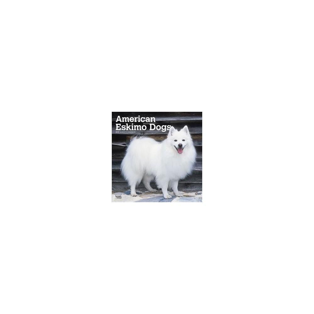 American Eskimo Dogs 2019 Calendar - (Paperback)