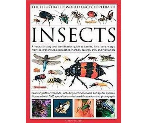 Illustrated World Encyclopedia of Insects : A Natural History and Identification Guide to Beetles, - image 1 of 1