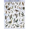 Eurographics Inc. Birds of Prey and Owls 1000 Piece Jigsaw Puzzle - image 2 of 4