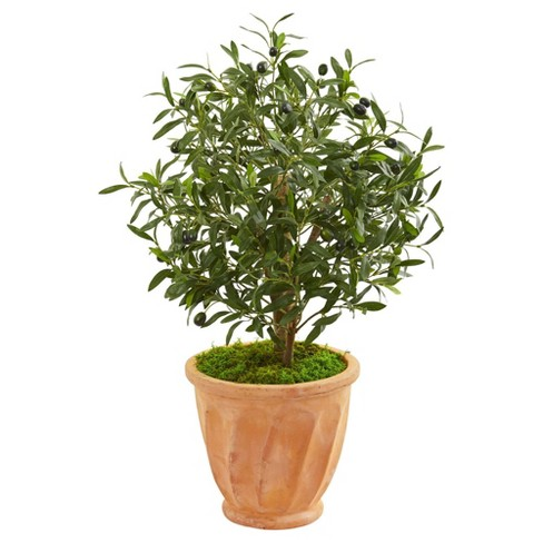2.8ft Artificial Olive Tree in Terra Cotta Planter Green - Nearly Natural - image 1 of 1