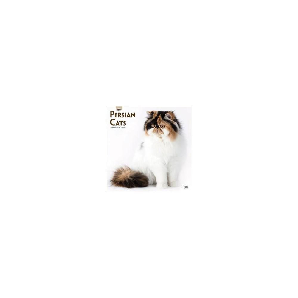 Persian Cats 2019 Calendar - (Paperback)