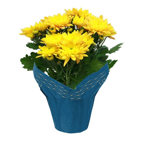 """6"""" Yellow Mum - image 1 of 1"""