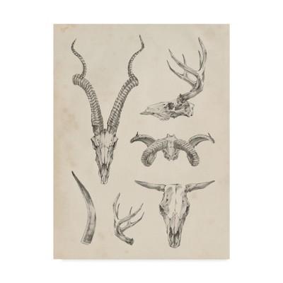 """Ethan Harper """"Skull And Antler Study I"""" Canvas Art - Trademark Fine Art"""