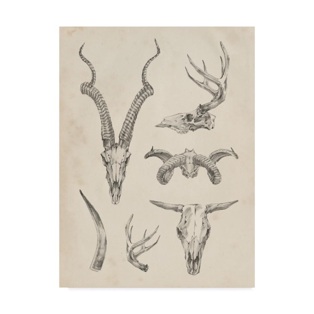 24 x 32 Ethan Harper Skull And Antler Study I Canvas Art - Trademark Fine Art Best