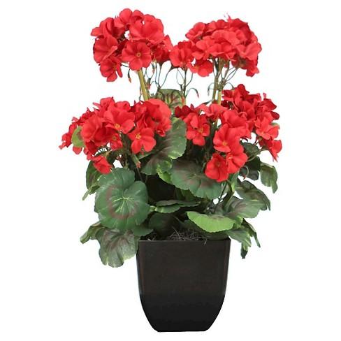 Geranium Bush in Black Pot - Red - image 1 of 1
