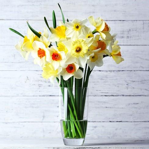 Daffodils Cutting Garden Vase Mixture Set Of 25 Bulbs Van Zyverden