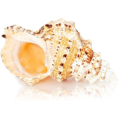 Juvale Large Natural Conch Sea Shell (8 to 10 in.)