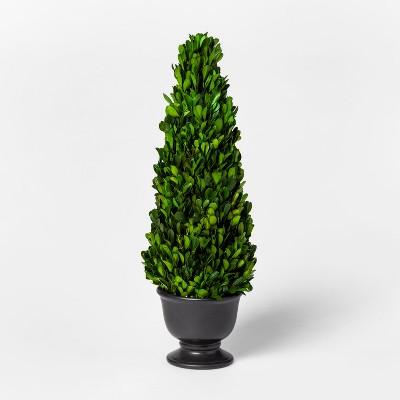Preserved Boxwood Cone Tree - Smith & Hawken™