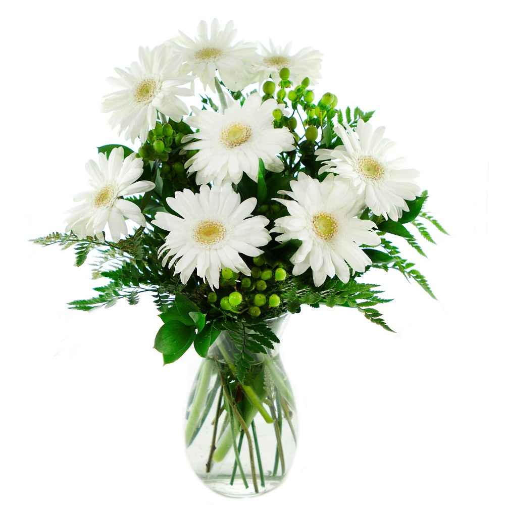 KaBloom Perla Daisies Fresh Flower Arrangement - with Vase