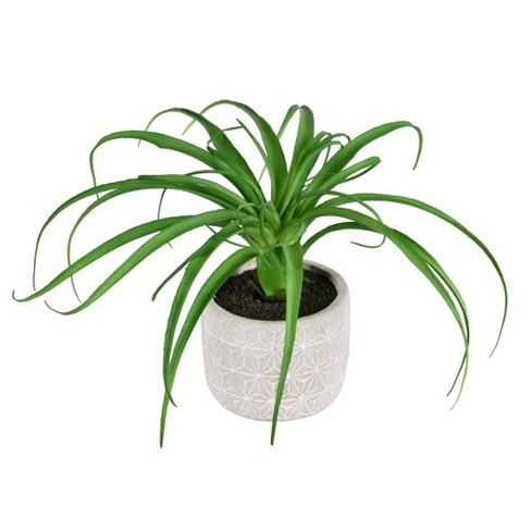 """Vickerman 8"""" Artificial Green Succulent in Container. - image 1 of 2"""