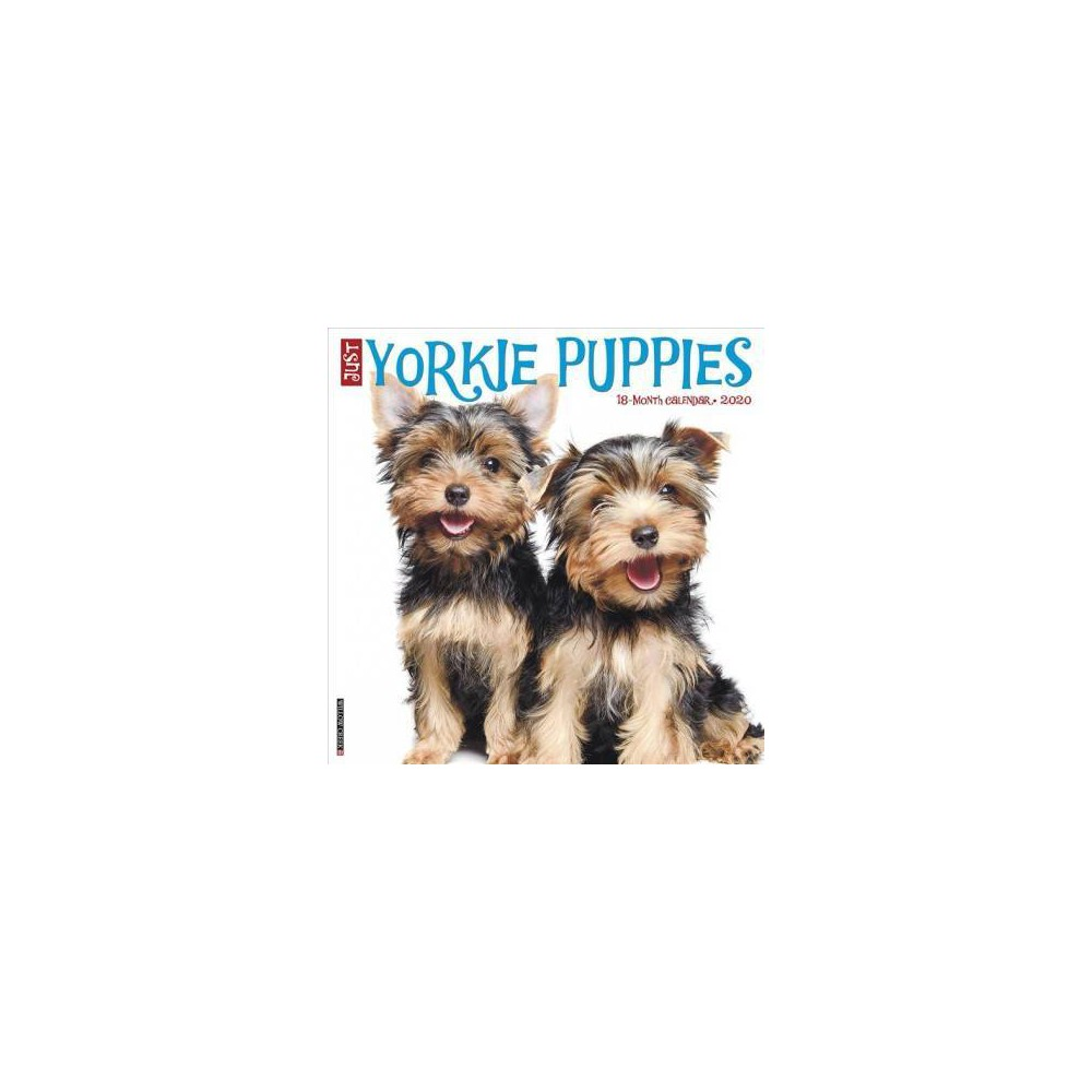 Just Yorkie Puppies 2020 Calendar - (Paperback)