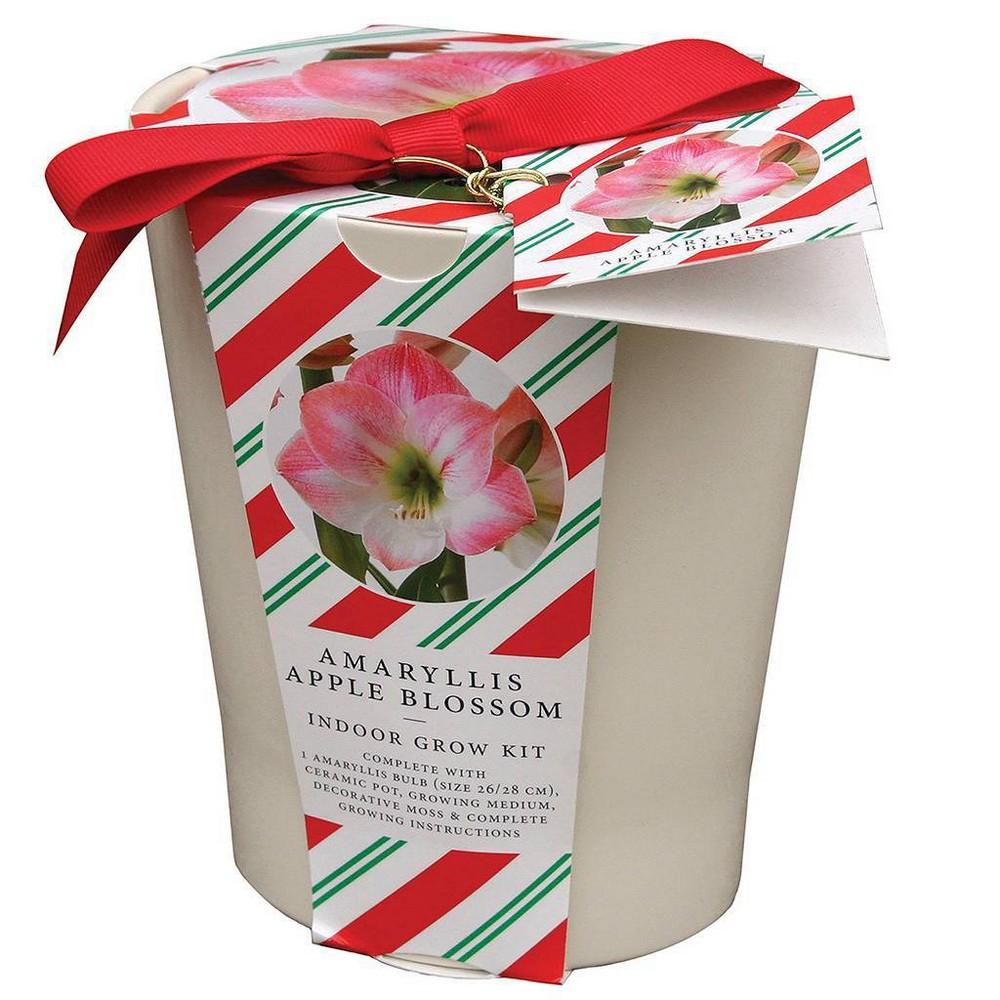 Image of Amaryllis Apple Blossom Kit with French Vanilla Ceramic Planter - Van Zyverden