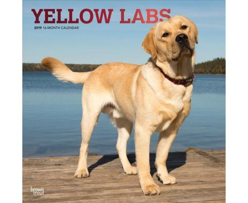 Yellow Labs 2019 Calendar -  (Paperback) - image 1 of 1
