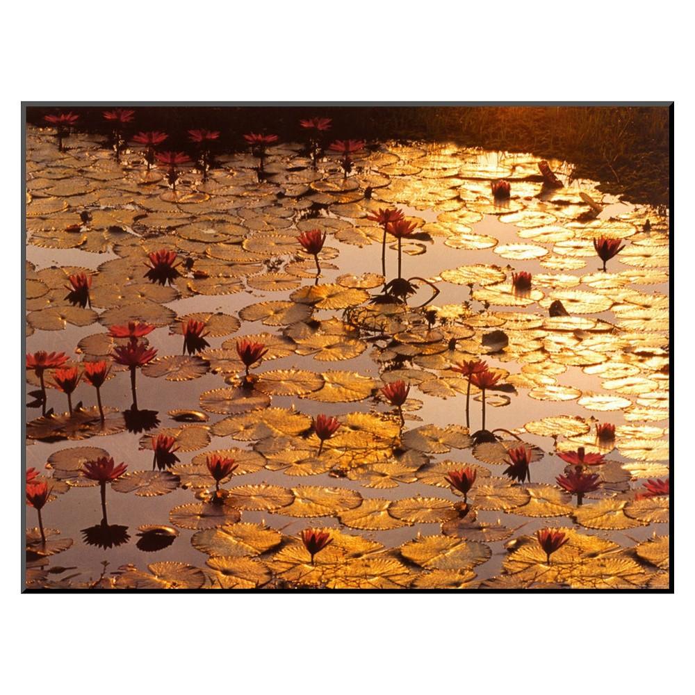 Art.com - Lotus Pond Mounted Print