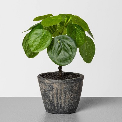 "6.5"" Faux Pilea Potted Plant - Hearth & Hand™ with Magnolia"