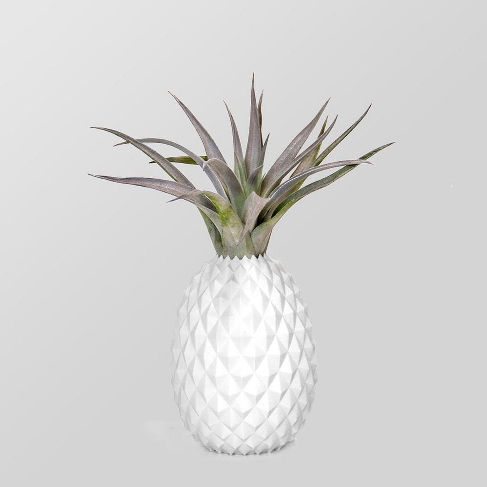 Image of Ananas Plant in Pineapple Pot
