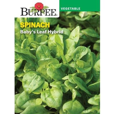 Burpee Spinach Baby's Leaf Hybrid