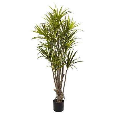 """Dracaena Silk Tree - (5"""")"""