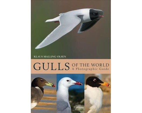 Gulls of the World : A Photographic Guide -  by Klaus Malling Olsen (Hardcover) - image 1 of 1