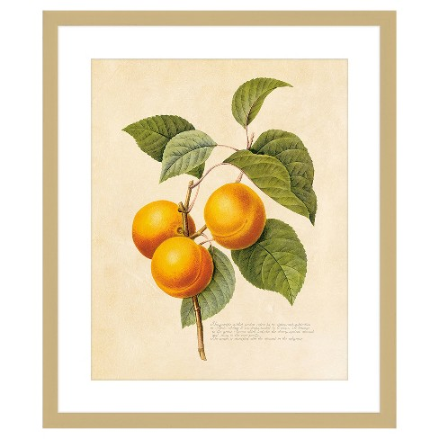 "18"" x 22"" Matted to 2"" Vintage Fruit Plant I Picture Framed Black - PTM Images - image 1 of 1"