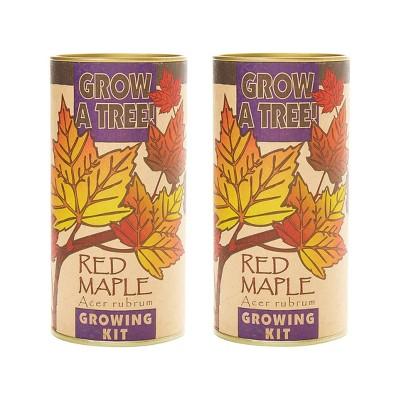 2pk Red Maple Seed Grow Kit - The Jonsteen Company