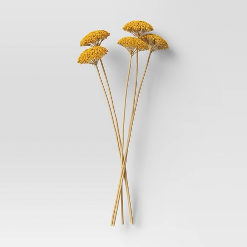 "20"" Dried Achillea Bunch Bundle Yellow - Threshold™ - image 1 of 3"
