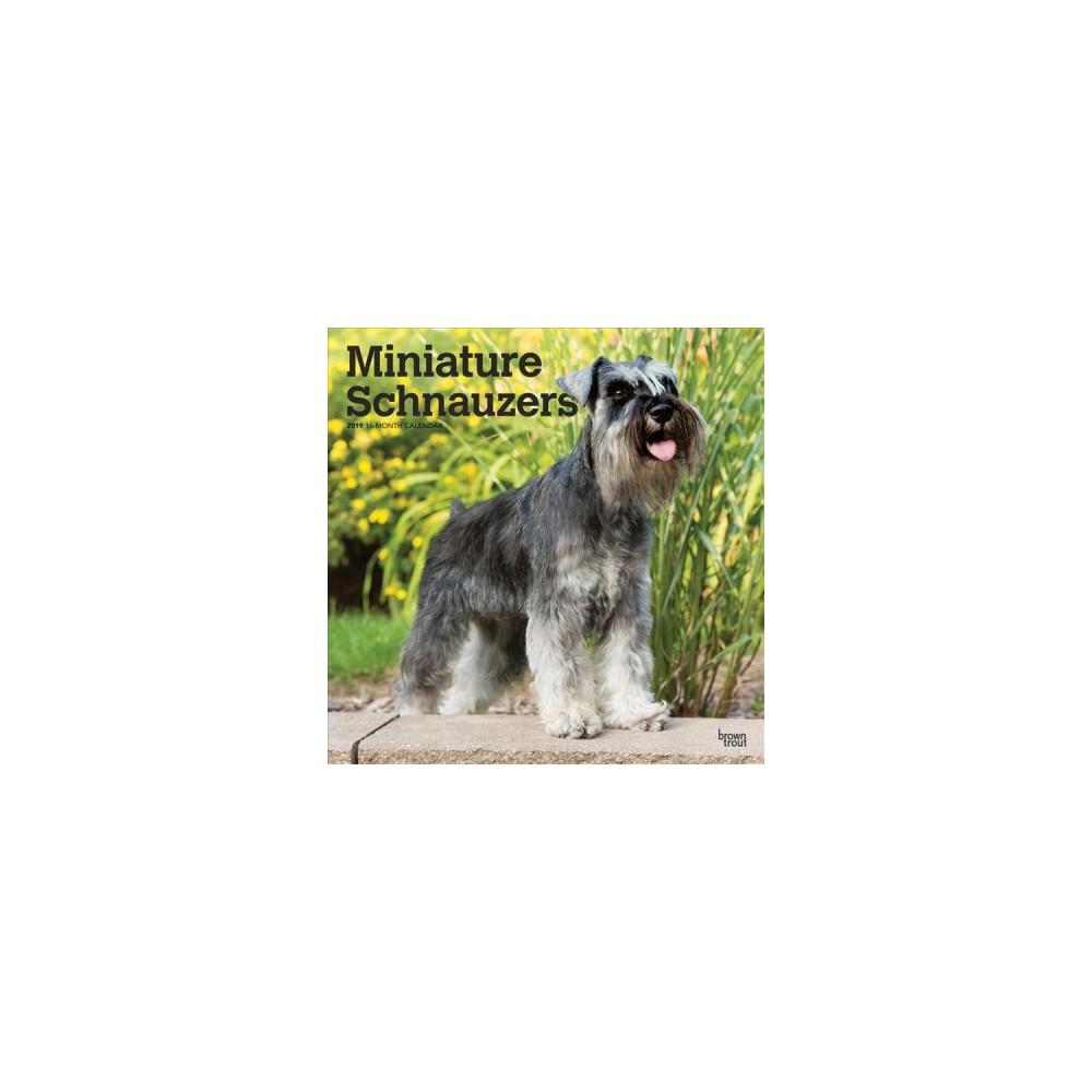 Miniature Schnauzers 2019 Calendar - (Paperback)