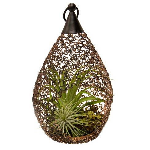 Living Lantern Air Plants In Decorative Metal Container - Livetrends Design - image 1 of 2