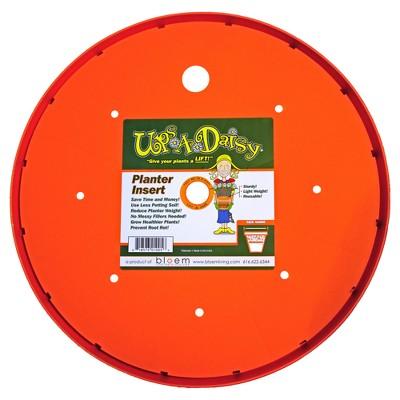 Ups A Daisy - Orange - Bloem