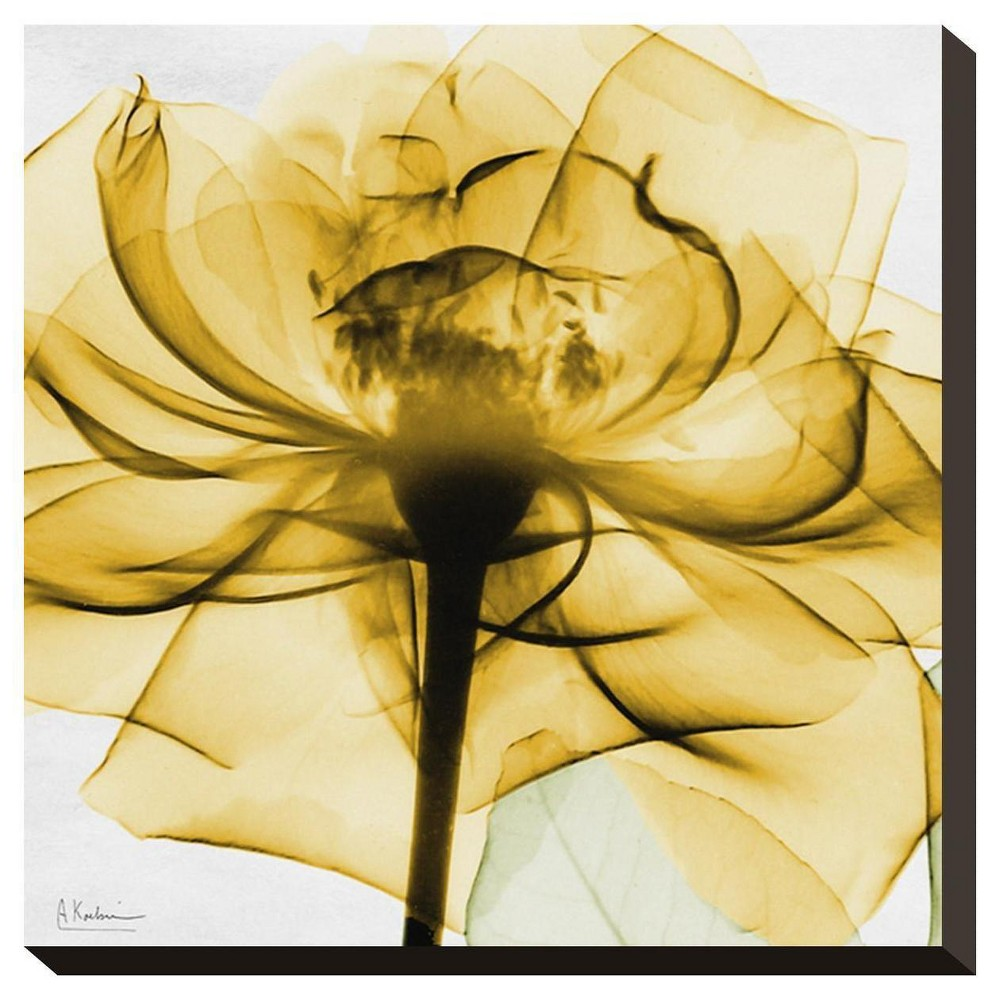 Golden Rose Close - Up By Albert Koetsier Stretched Canvas Print - Art.Com, Multicolored