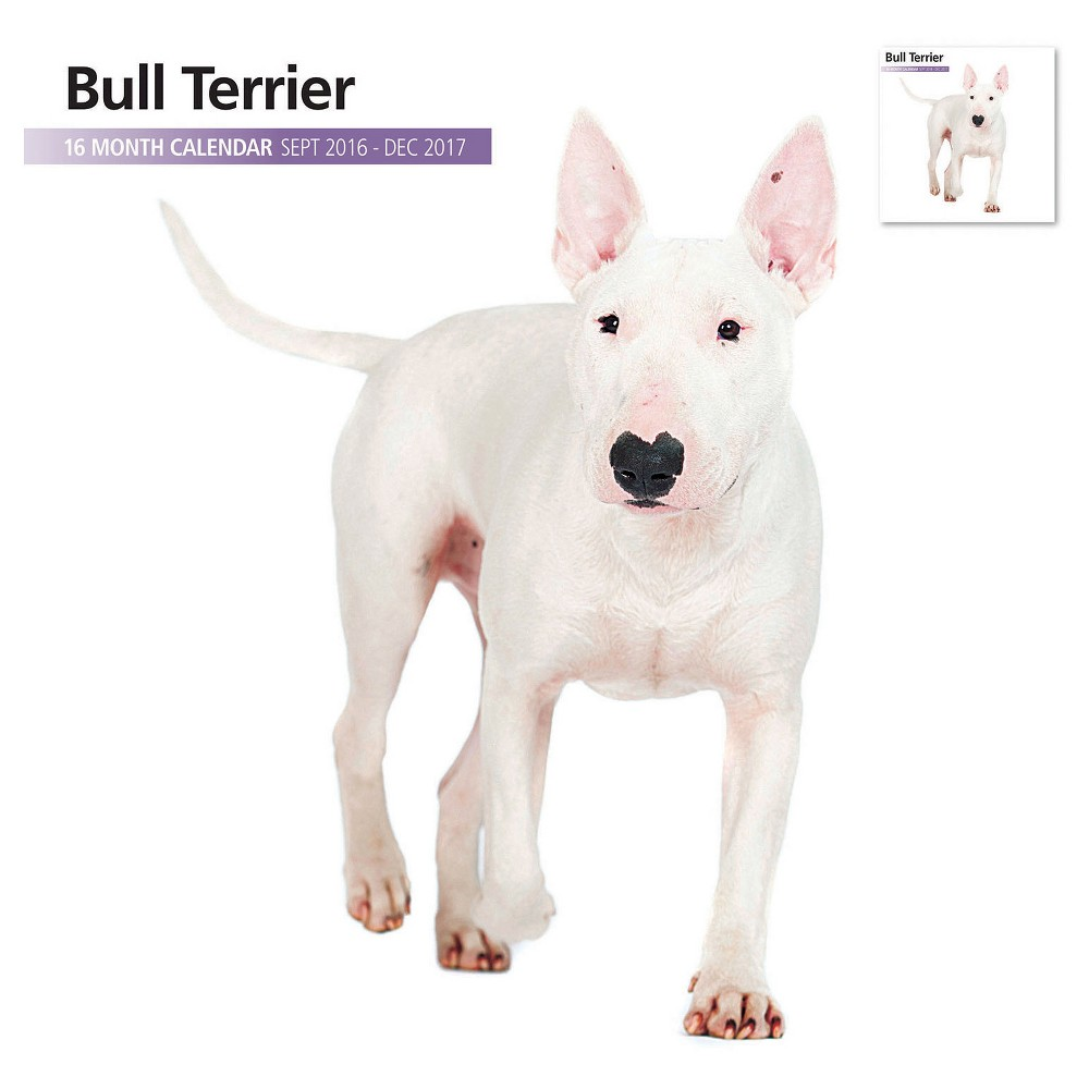 Bull Terrier 2016 18 Month Calendar