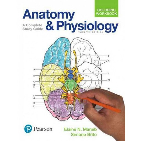 Anatomy and Physiology Coloring Workbook : A Complete Study Guide ...