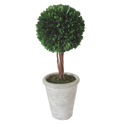 Preserved Boxwood Topiary - Large - Smith & Hawken™ - image 1 of 2