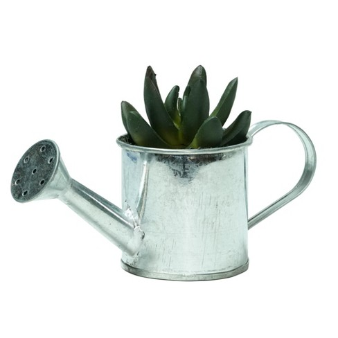 """Northlight 4"""" X Pachyveria Succulent in Water Can Artificial Potted Plant - Green/Silver - image 1 of 1"""