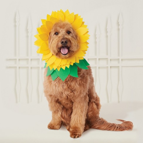 Sunflower Headwear Costume for Dog - Hyde and Eek! Boutique™ - image 1 of 3