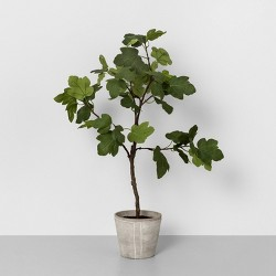 """39"""" Faux Common Fig Potted Plant - Hearth & Hand™ with Magnolia"""