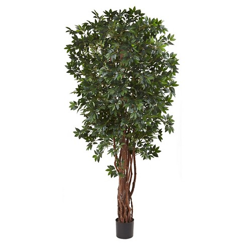 "Lychee Tropical Evergreen Silk Tree - Green (7.5"") - image 1 of 1"