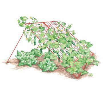 Large Cucumber Trellis A Frame - Gardener's Supply Company