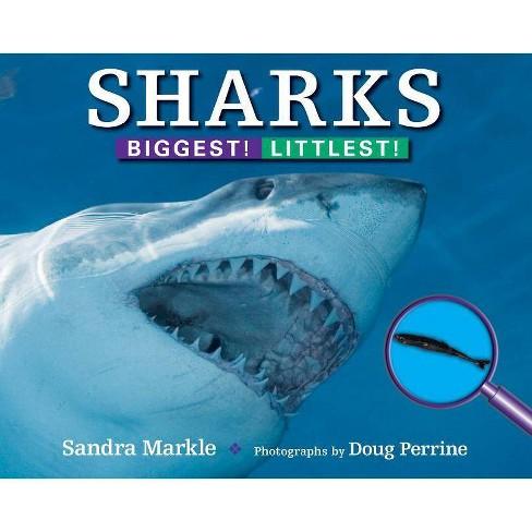 Sharks - (Biggest! Littlest! (Paperback)) by  Sandra Markle (Paperback) - image 1 of 1