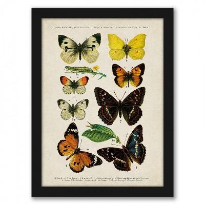 Americanflat Butterfly Specimen Diagram by Samantha Ranlet Black Frame Wall Art