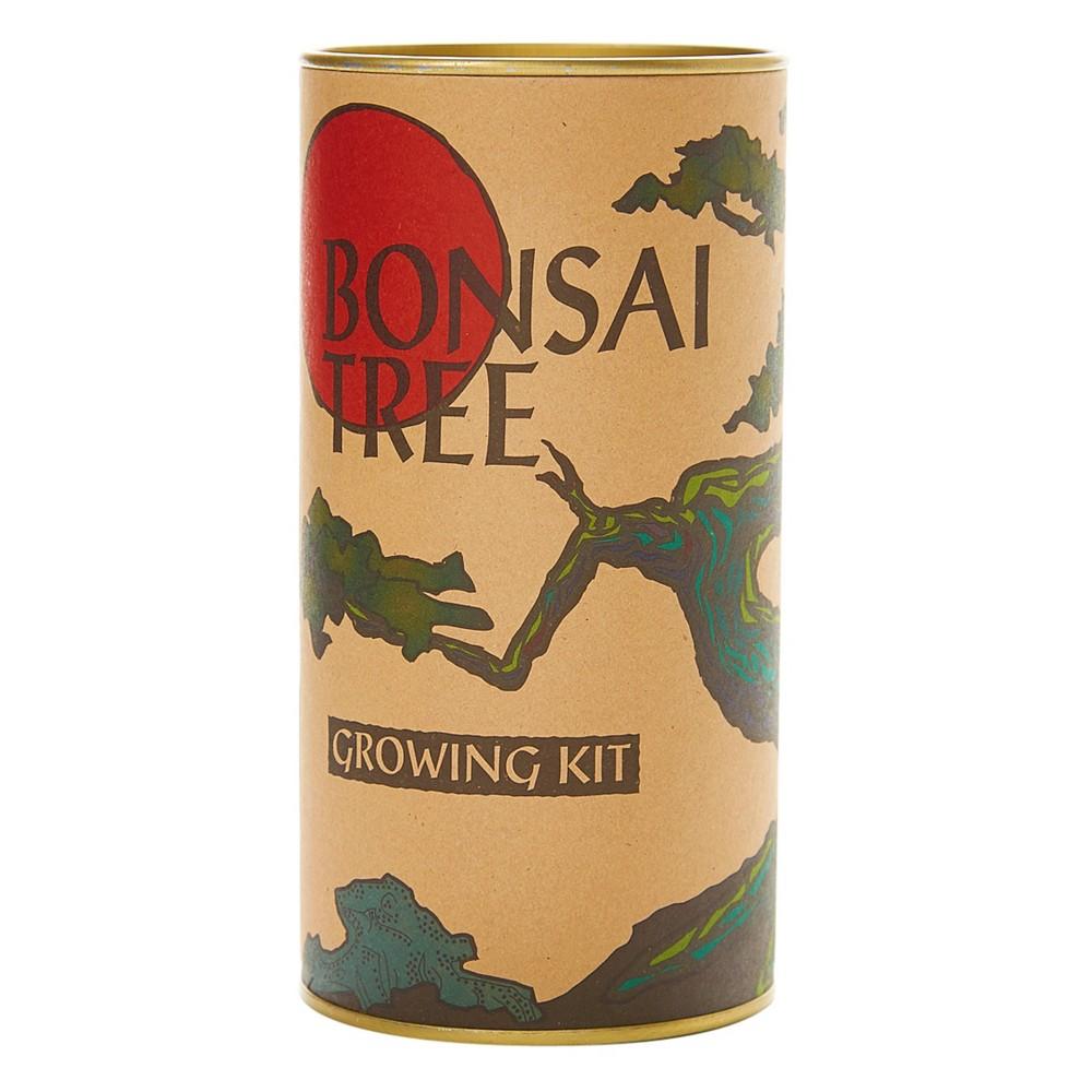 Image of Japanese Maple Bonsai Tree Seed Grow Kit - The Jonsteen Company